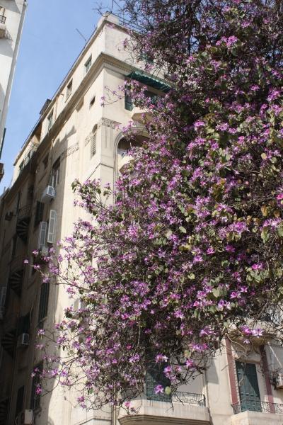 zamalek-nil-promenade3